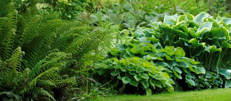 Bestil havearkitekt til dine havedrømme