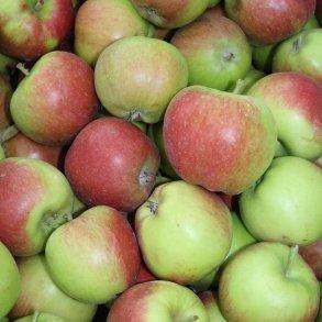 Frugt- og nyttehaven