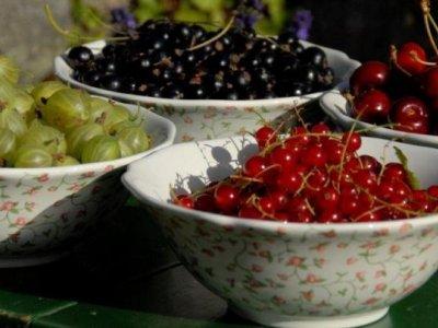 Frugt og Børn - Plant og plej
