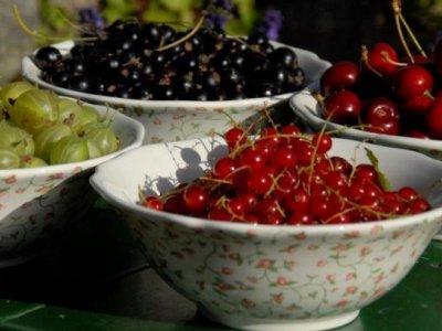 Frugtbuske