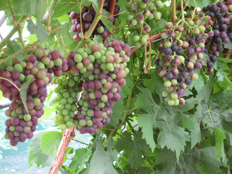 Vinplanter - Home and Garden Amba