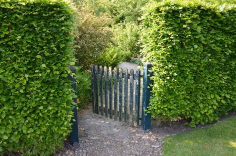 Er du træt af stakit - plant hæk, som kan klippes - Home and Garden Amba
