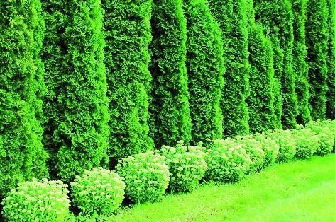 Hæk til det hele - Home & Garden AmbA