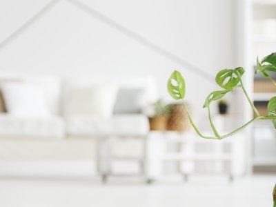 På beatet med trendy stueplanter