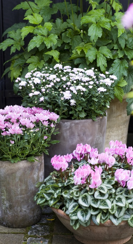 Planter i krukker - Home and Garden Amba