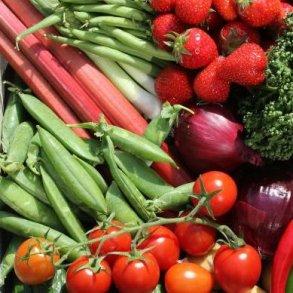 Køkkenhavens spiselige planter