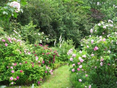 Klip i roserne – eller vent lidt