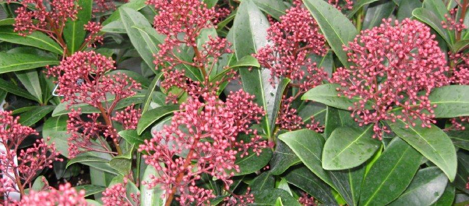 Vinterkrukkeplanter - Home and Garden Amba