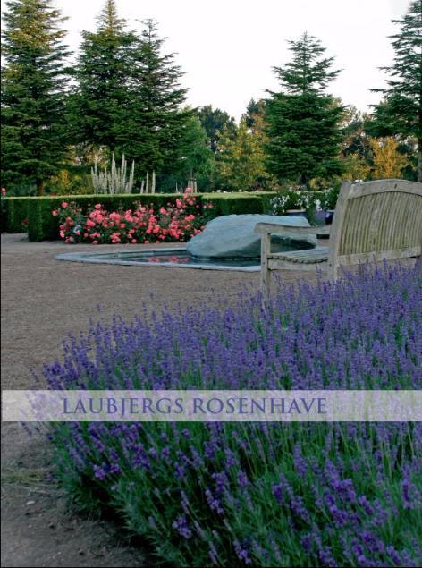 Forsiden af bogen Laubjergs rosenhave er prydet med lavendelbedet fra Rosenhaven