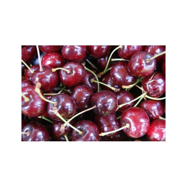 Prunus avium `Lapins´