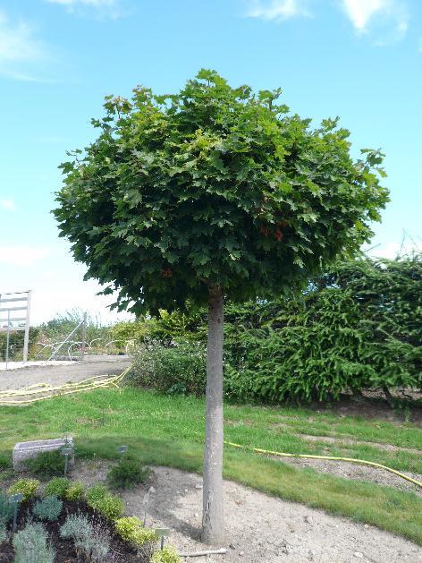 Træer i haven små Fugle i